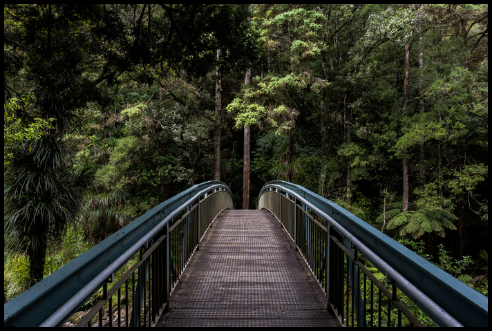 Empty footbridge leading to a jungle. class=
